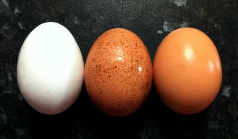 10 простых способов разнообразить Вашу белковую диету