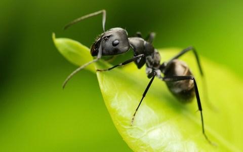 Un vraie fourmilière dans votre maison.