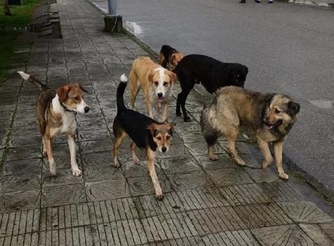 Как избежать нападения бродячих собак