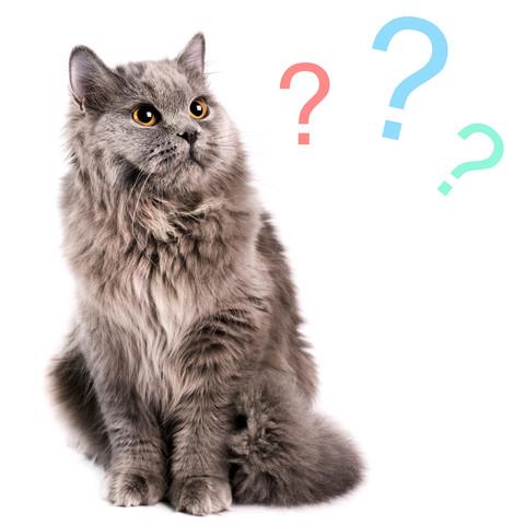 Комплексы, домики, когтеточки для кошек на заказ
