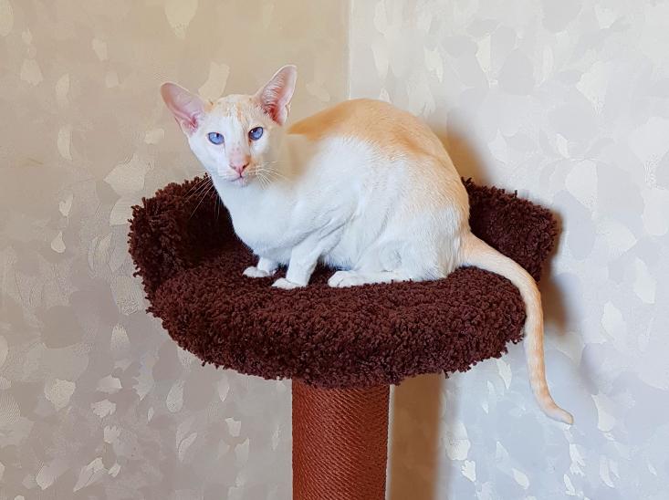 Новый домик для кошки