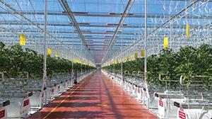 Климатическая система ModulAIR будет управлять тепличным комплексом