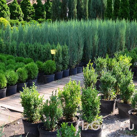 Выбор деревьев для сада