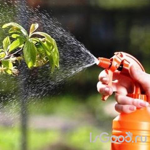 Лечение растений нехимическими средствами