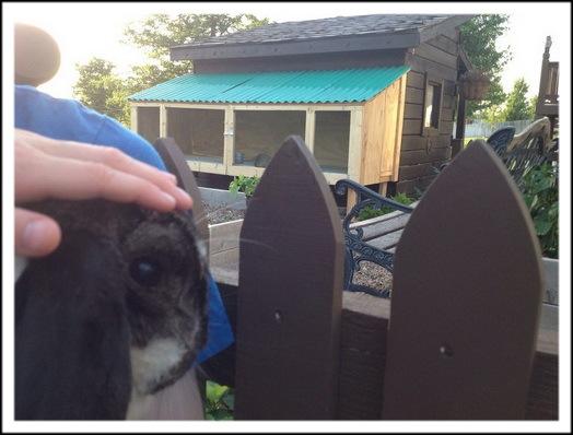 Дружелюбный кролик-отель