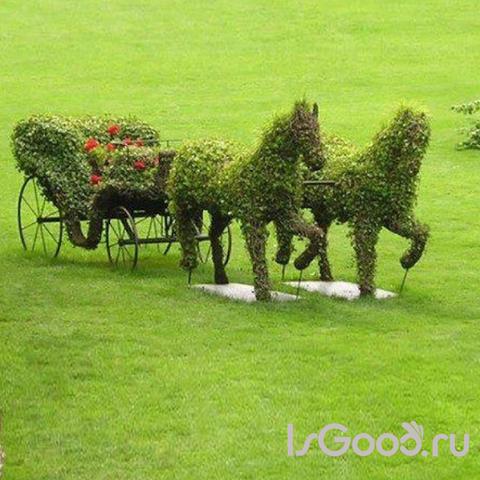 Топиартное искусство и создание необычных форм из хвойных растений