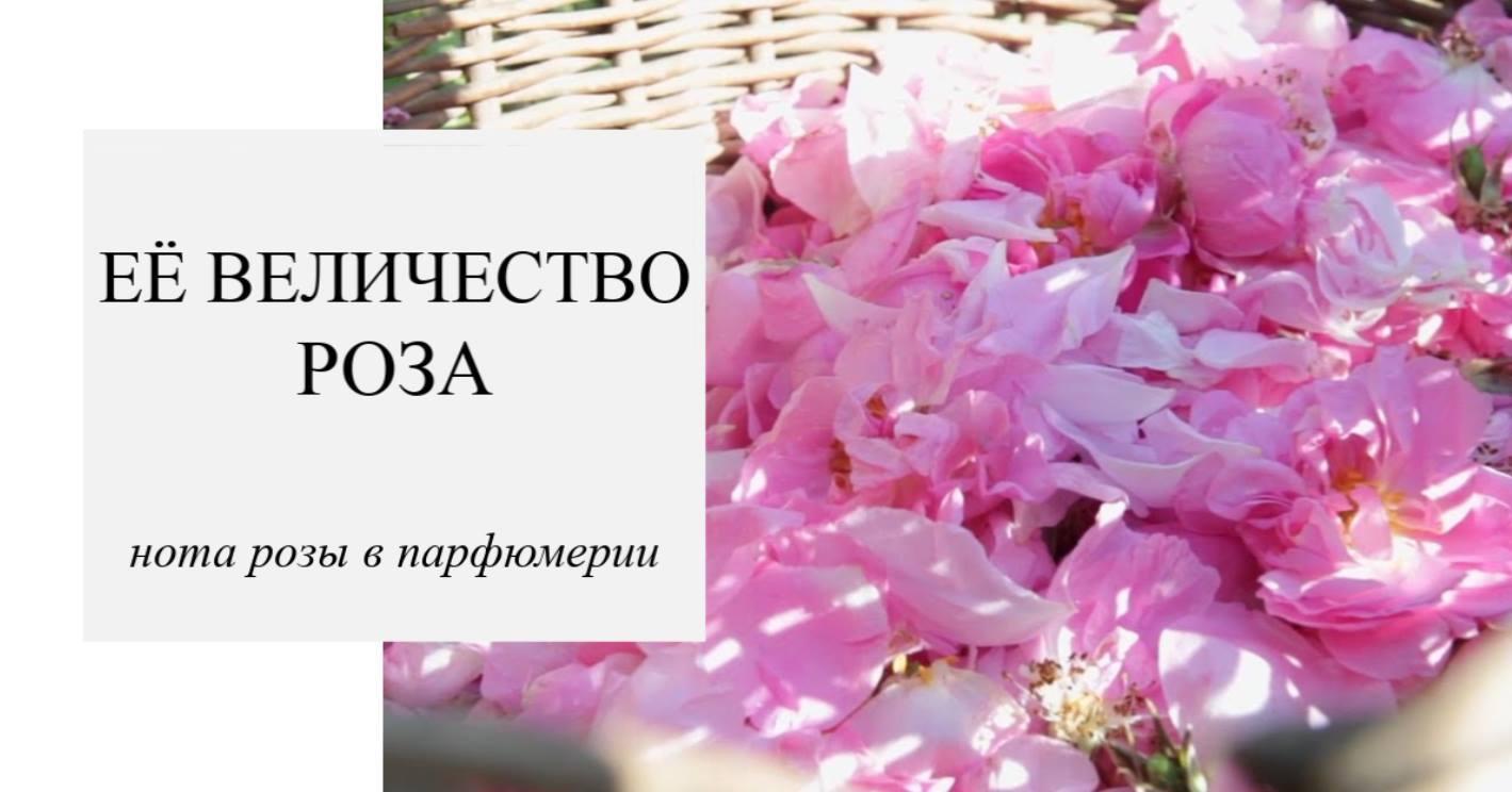 Нота февраля - роза