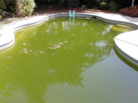 Решение проблем, возникающих при обслуживании бассейна