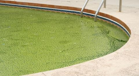 Что делать если появились водоросли в бассейне?