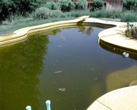 Средства против роста водорослей в бассейне