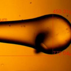 Корейские исследователи разработали 3D-биопринтер с открытым исходным кодом