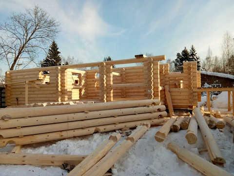 Когда можно заказать сруб из зимнего леса?