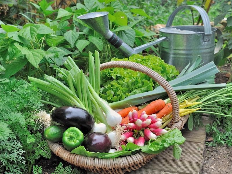 На участках ИЖС теперь нельзя выращивать овощи и фрукты?