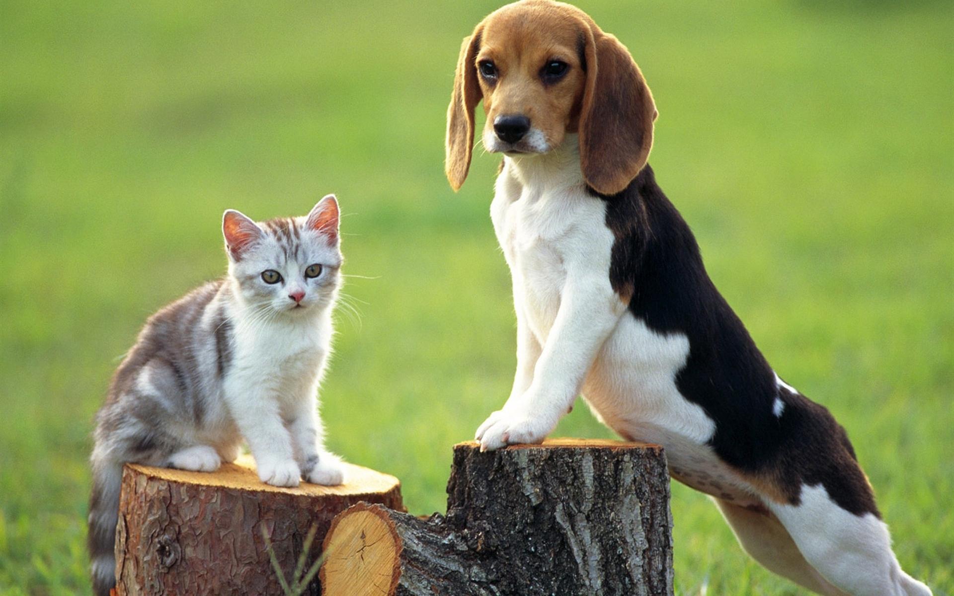 Тамбова, картинки пород собак и кошек