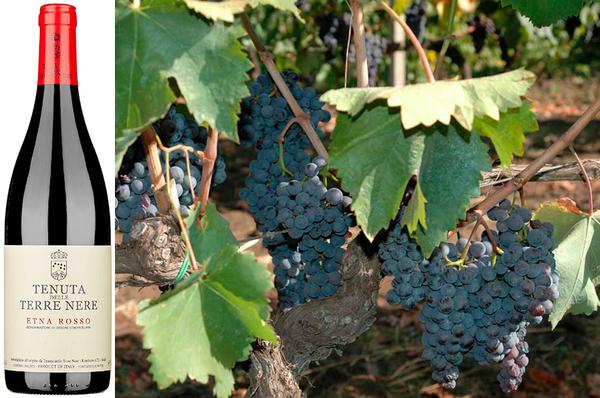 Вино недели c 24 июля - Tenuta delle Terre Nerre Etna Rosso
