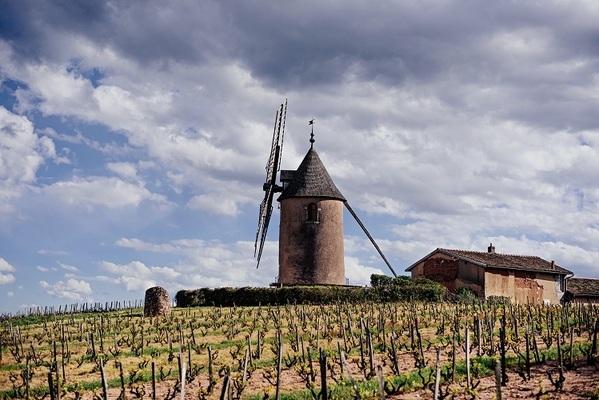 Chateau du Moulin-a-Vent и новые вина Божоле