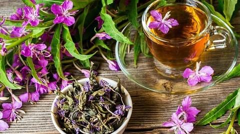 Заготовка и ферментация Иван-чая в домашних условиях