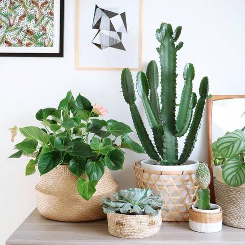 Почему сейчас так модно заводить много комнатных растений?