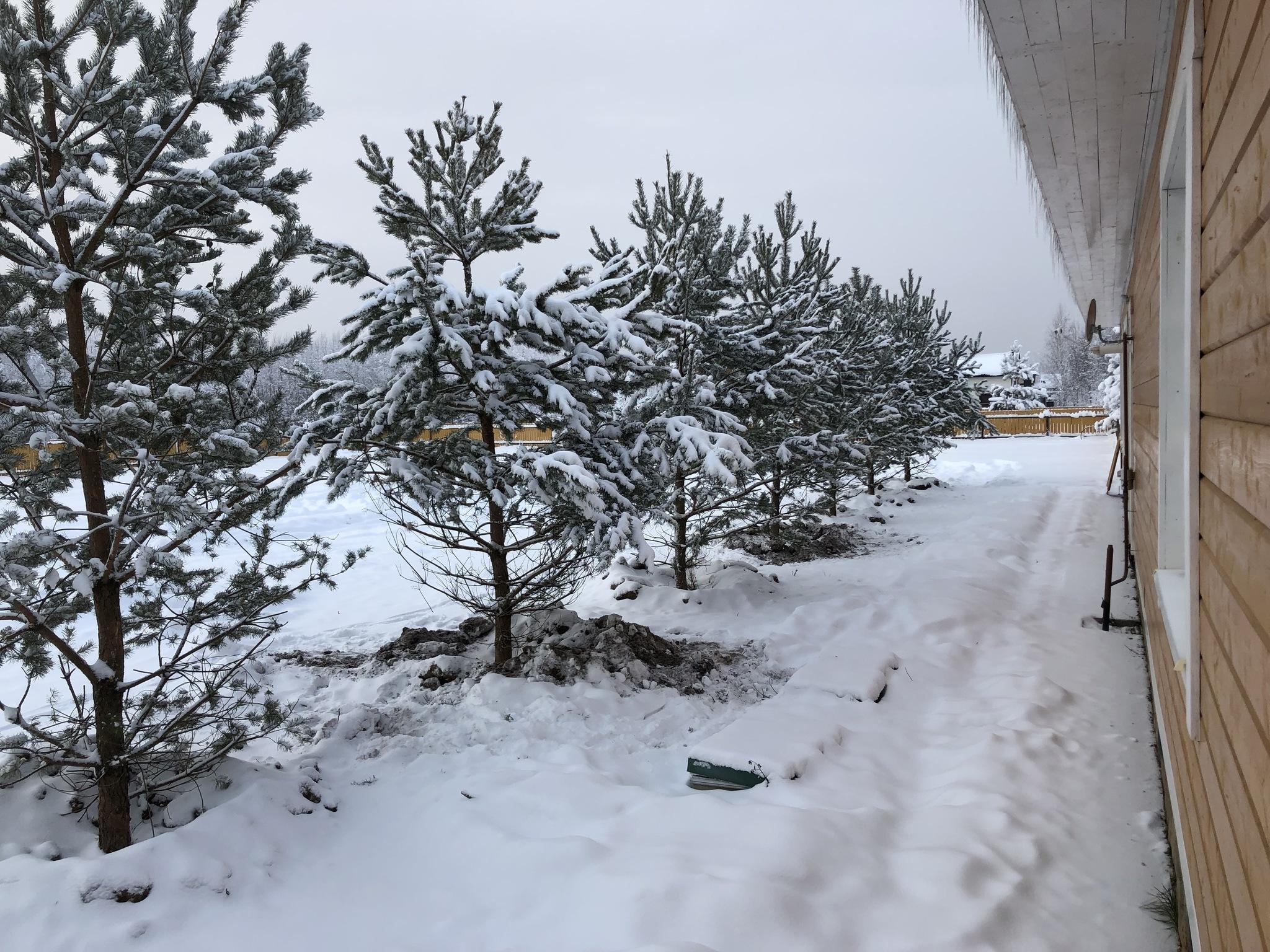 Вдоль Общественного центра «Романовского Парка» высажены сосны