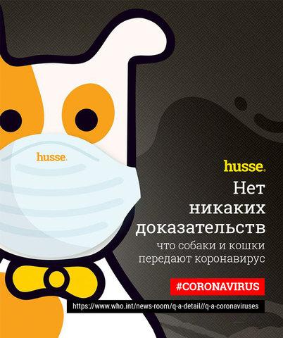 Нет никаких доказательств, что собаки и кошки передают коронавирус
