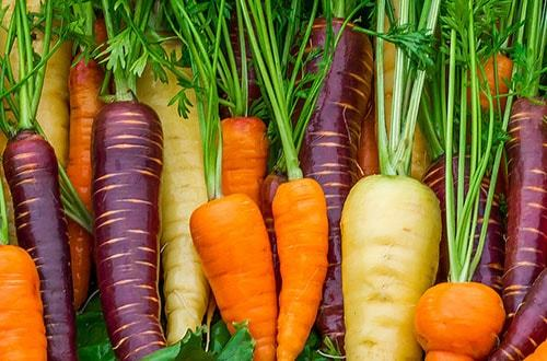 Когда сажать морковь?