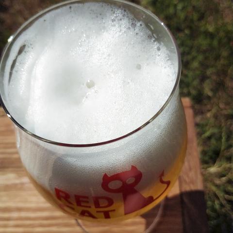 Еда для лагера - с чем сочетать самое популярное пиво