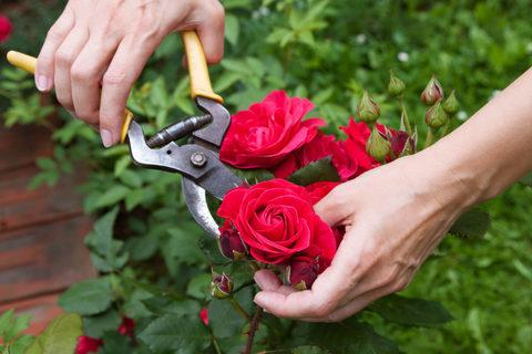 Подрезка цветов осенью: что надо знать об этой процедуре