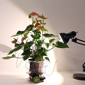 Создано растение-киборг