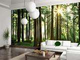 Среди прочих материалов фотообои выгодно выделяются своими декоративными качествами. Подойдут ли они для оформления вашей комнаты?