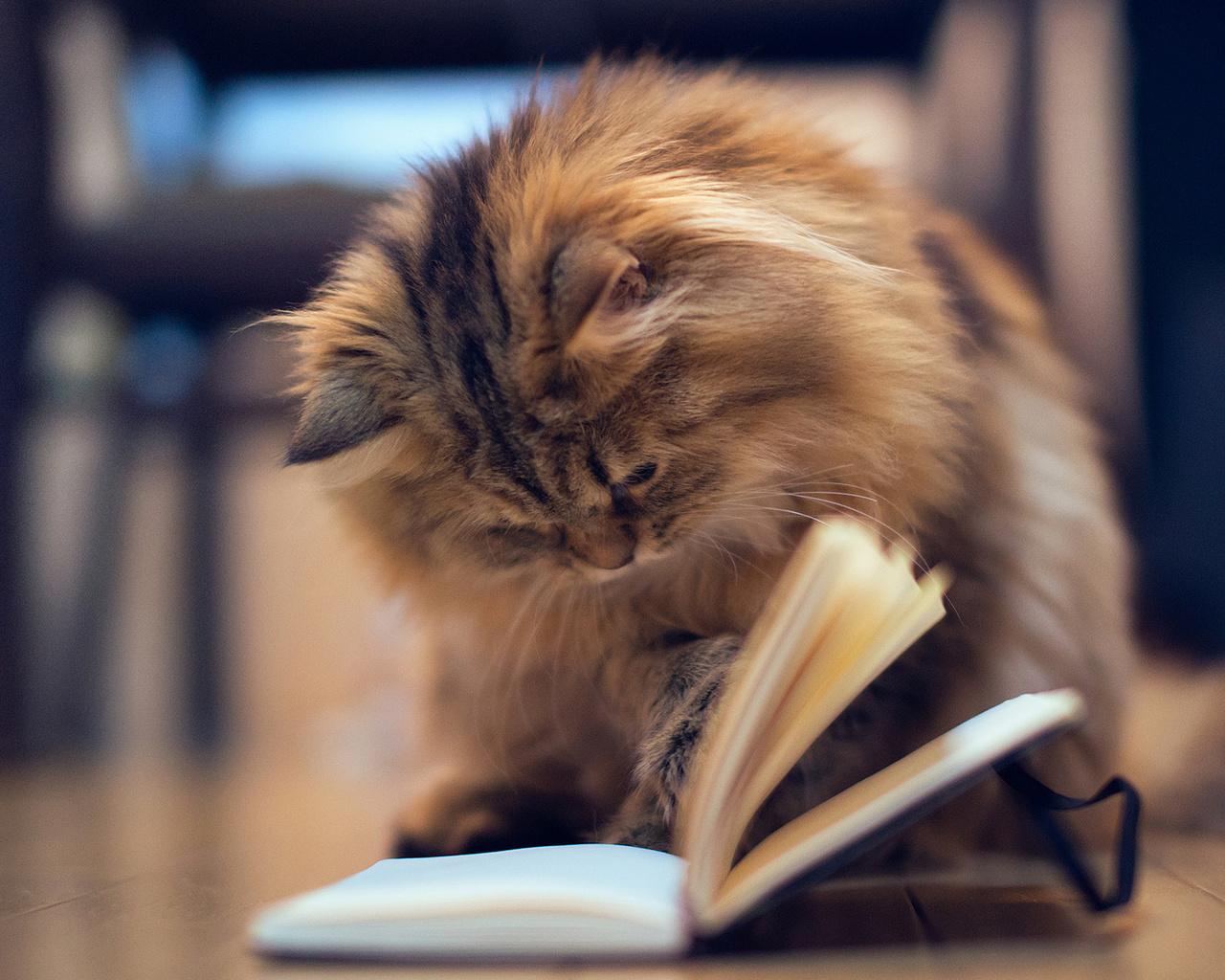 КВН - Как читают книги
