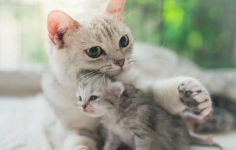 Кормление беременной кошки