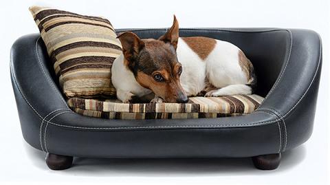 Советы по выбору лежанок и ковриков для собак