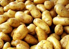 Как получить хороший урожай картофеля?