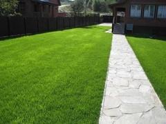 Как вырастить газон на участке?