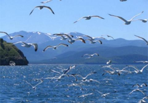 Как толпы туристов влияют на флору и фауну на Байкале?