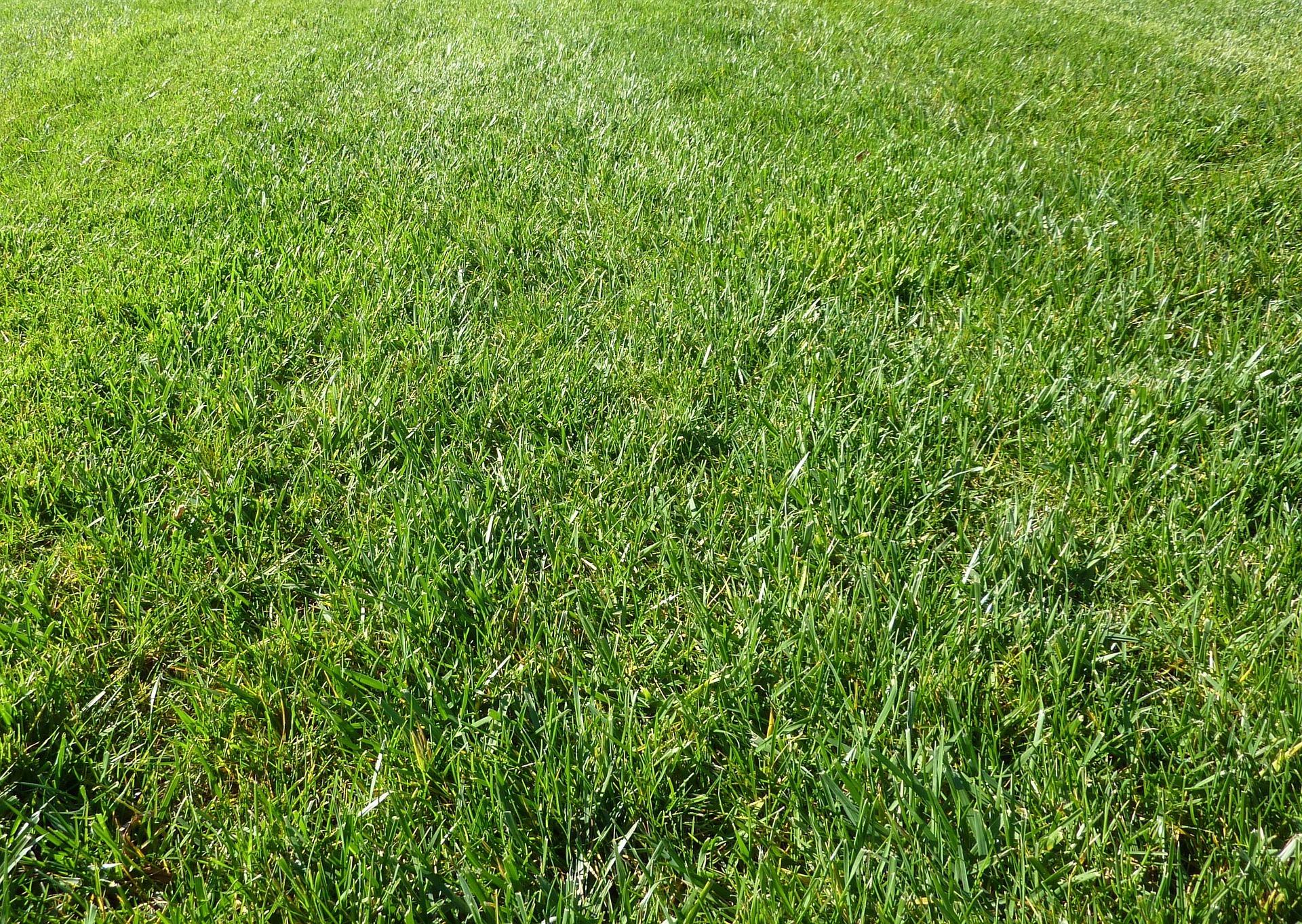 Удобрение газона и растений в саду: 5 самых распространенных ошибок