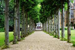 Побелка садовых деревьев: за и против