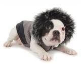 Как обеспечить собаке комфорт зимой