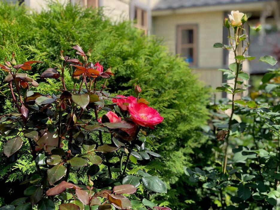 Правильный уход за цветами летом