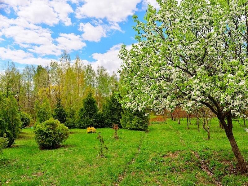 Работы в саду в мае