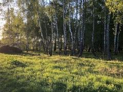 Уборка территории Яблоневого сада в «Романовском Парке»