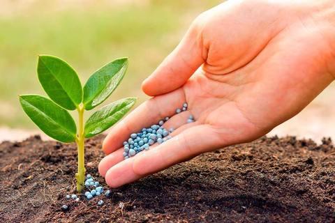 Удобрения для растений в саду, огороде, дома