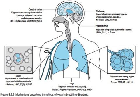 Значение тренировки дыхания для улучшения осанки, баланса, уменьшения боли и дискинезии