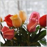 Дарите друг другу цветы