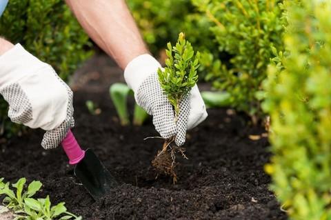 Состояние растения при посадке