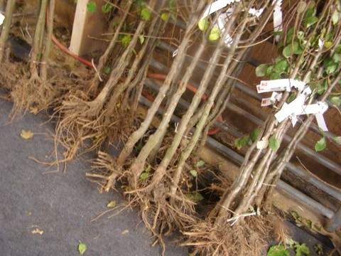 Растения с закрытой корневой системой