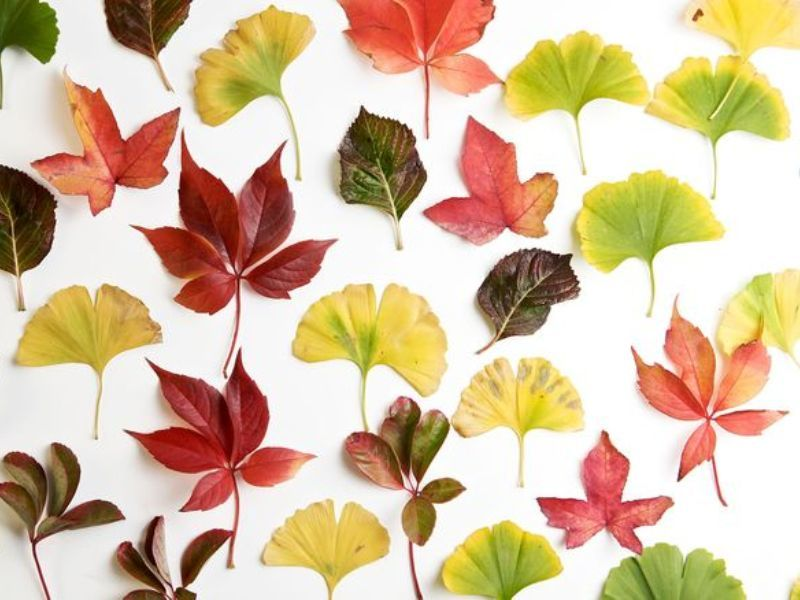 Делаем осеннее дерево-гербарий в детском саду