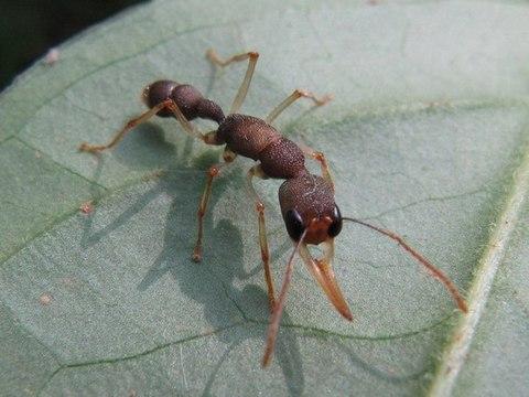 Уход за муравьями во время отпуска