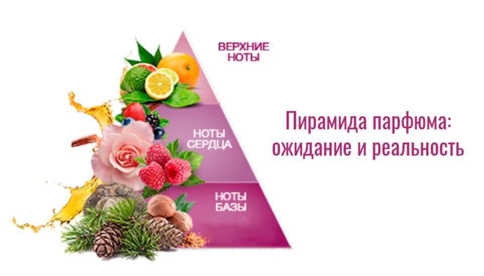 Пирамида парфюма