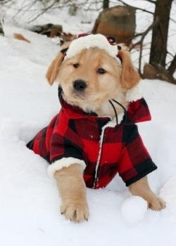 Нужна ли собакам одежда зимой? 4 совета от ветеринаров
